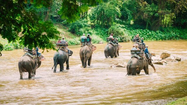 Tour du lịch Thái Lan - Làng voi Pattaya